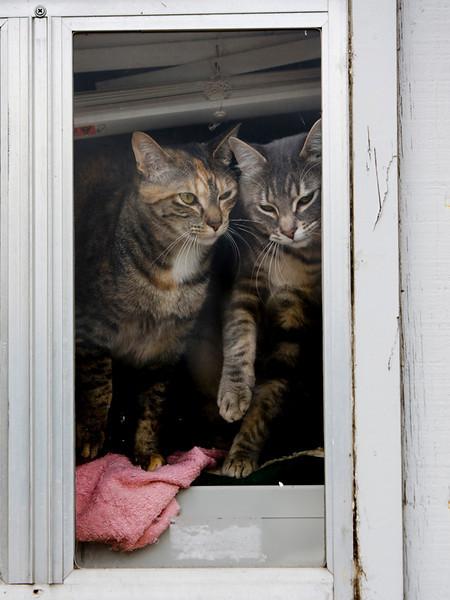 Kitties 01