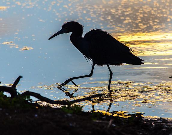 Orlando Wetlands Encore