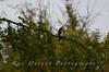 Fishing Osprey 1
