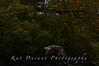 Fishing Osprey 24