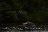 Fishing Osprey 21