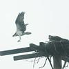 Jack Haley/Messenger Post Media