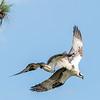 Virginia-Birds-June-20178307