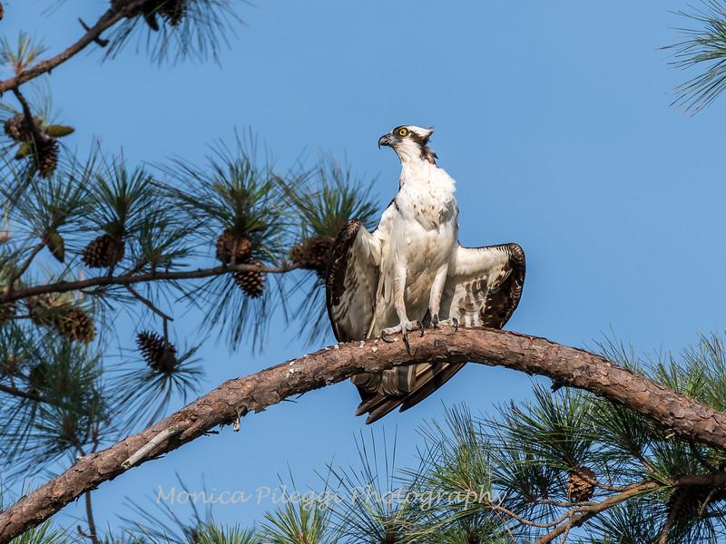 Virginia-Birds-June-20178432