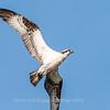 Virginia-Birds-June-20178372