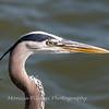 Virginia-Birds-June-20177499