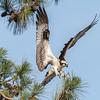 Virginia-Birds-June-20178369