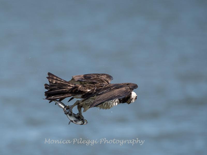 Virginia-Birds-June-20177513