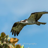 Virginia-Birds-June-20177422