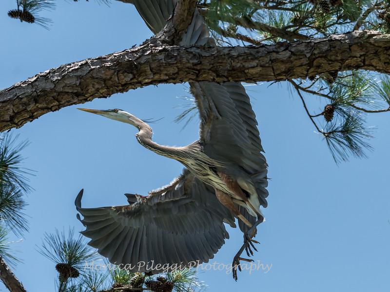Virginia-Birds-June-20177266