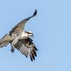 Virginia-Birds-June-20178321