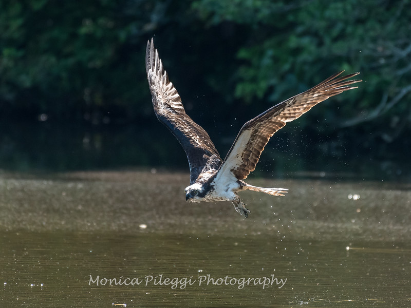 Virginia-Birds-June-20178093
