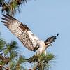 Virginia-Birds-June-20178371