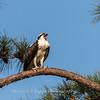 Virginia-Birds-June-20178435