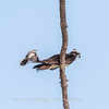 Virginia-Birds-June-20178297