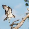 Virginia-Birds-June-20178411