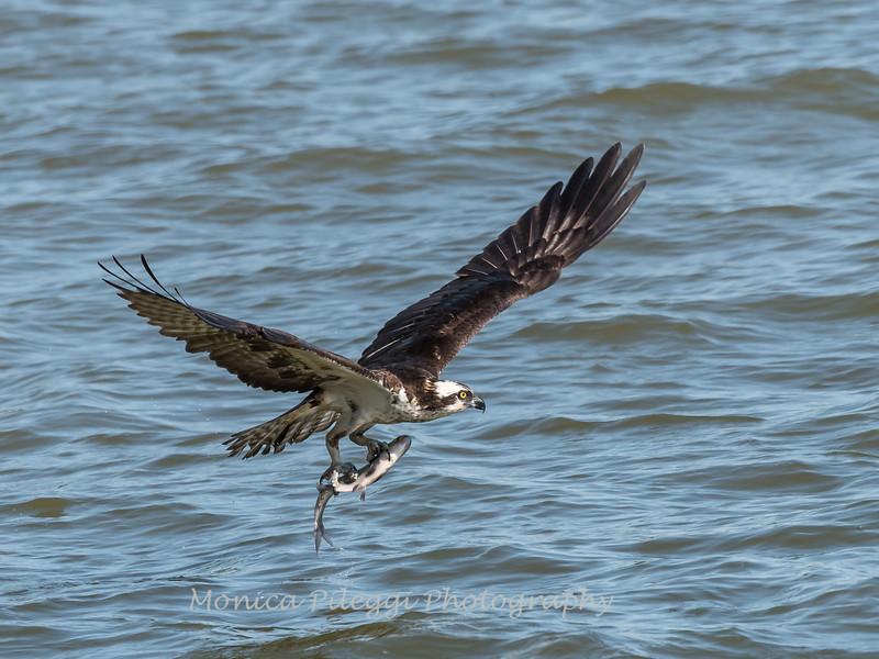 Virginia-Birds-June-20177507