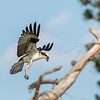 Virginia-Birds-June-20178412