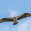 Virginia-Birds-June-20178384