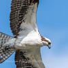 Virginia-Birds-June-20178289