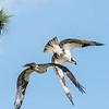 Virginia-Birds-June-20178306