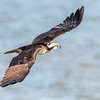 Virginia-Birds-June-20178331