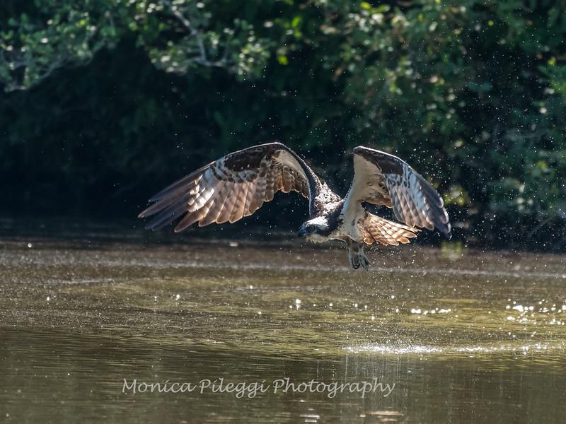Virginia-Birds-June-20178088