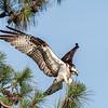 Virginia-Birds-June-20178370