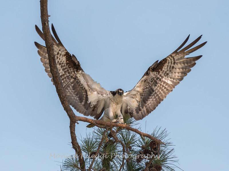 Virginia-Birds-June-20178013