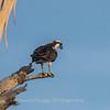 Virginia-Birds-June-20178466