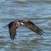 Virginia-Birds-June-20177508