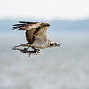 Virginia-Birds-June-20178351