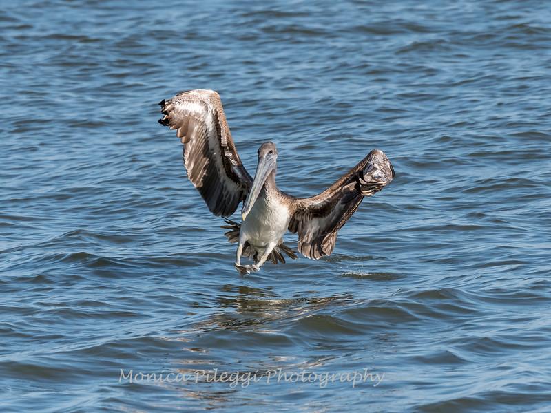 Virginia-Birds-June-20177695