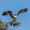 Virginia-Birds-June-20177417