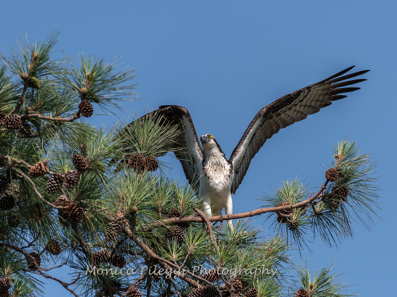 Virginia-Birds-June-20177539