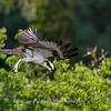 Virginia-Birds-June-20178359