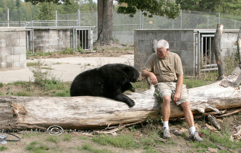 Dean Oswald having a heart to heart talk with a 500lb Black Bear - Oswalds Bear Ranch, Michigan