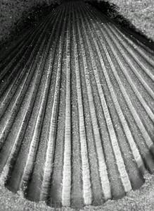 2007_0370