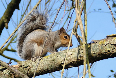 For all it's compositional faults it's the only squirrel picture I have. And how can that not be a favourite.