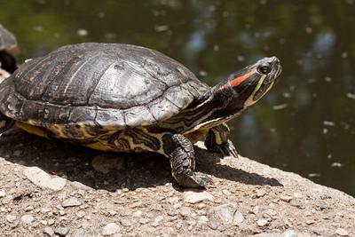 6160 Turtle
