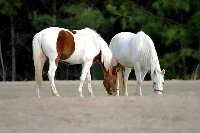 Sam Lowrey's horses