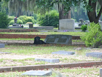 Dead man's dog. He keeps watch over his master's grave.
