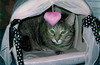22- Luna in Her Pink House (Miles)