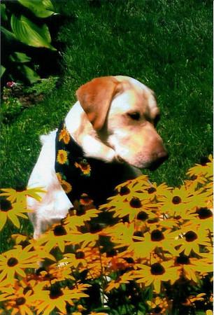 14- Dog Daisies of Summer (Holmes)
