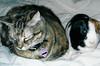 24- Stella & Pixie (Janssen)