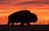 Bull Bison silhouette