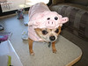 Bruiser the pig