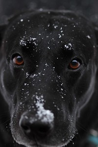 Coal with his snow face