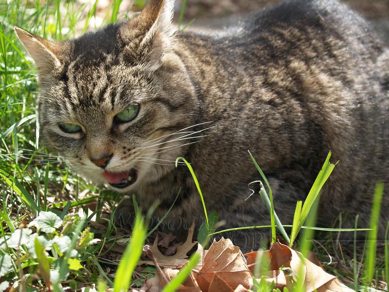 """Shy Girl"" munching grass"