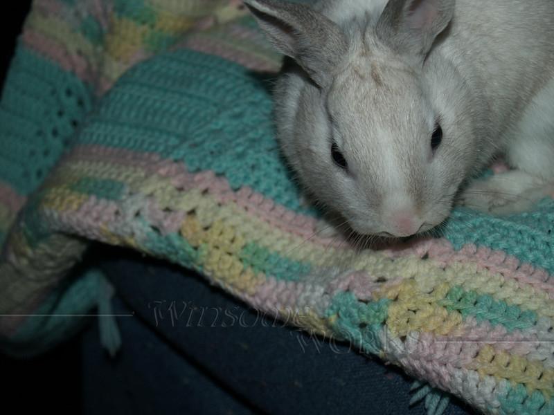 Bugsy rabbit